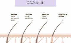 Жизненный цикл ресниц